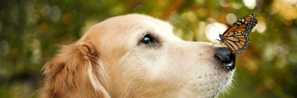 gos tardor 2