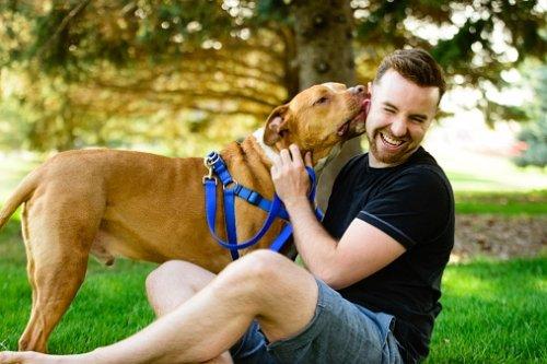 7 raons per esterilitzr el teu gos gat